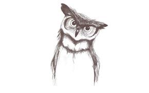 Picture owl, bird, minimalism, light background, owl