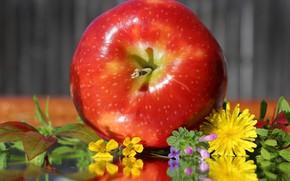 Wallpaper flowers, apples, dandelions