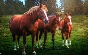 Picture horses, horse, trio