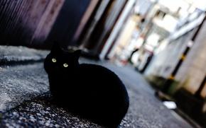 Wallpaper cat, eyes, black, street
