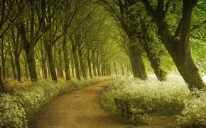 Wallpaper spring, track, photographer, summer, forest, Lars van de Goor, path, Amsterdam, trees, light, shop