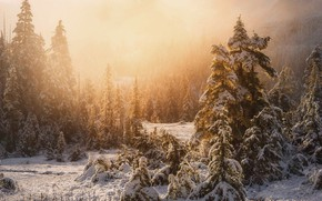 Picture winter, forest, light, snow, nature