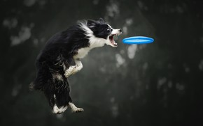 Picture jump, the game, dog