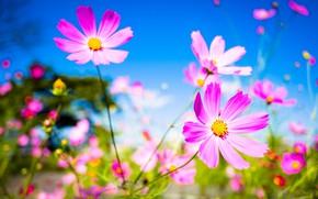 Picture macro, flowers, background, petals