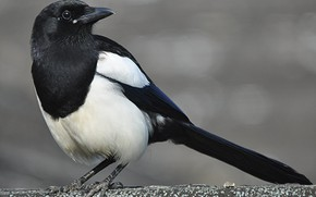 Picture bird, beak, tail, forty