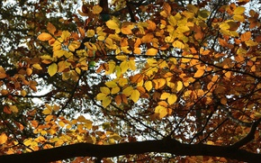 Picture Autumn, Trees, Branch, Fall, Foliage, Autumn, Trees, Leaves