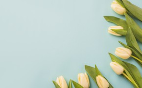 Picture flowers, yellow, Tulips, buds