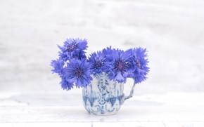 Picture flowers, blue, flowering, cornflower