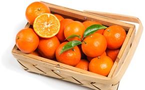 Picture Basket, citrus, Mandarin