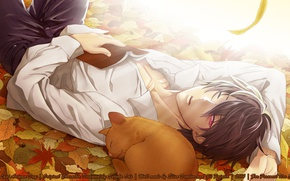 Picture autumn, light, stay, sleep, book, guy, acorns, Psychic Detective Yakumo, fallen leaves, red cat, white …