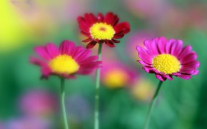 Picture nature, petals, stem, meadow