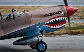 Wallpaper fighter, cabin, pilot, Warhawk