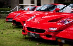Picture auto, nature, ferrari, Ferrari, auto, nature, f 50, f 50