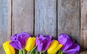 Picture flowers, yellow, purple, tulips, fresh, yellow, wood, flowers, beautiful, tulips, spring, purple