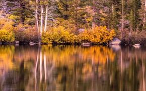 Picture autumn, trees, lake, stones, shore, CA, USA, the bushes, Mammoth Lakes
