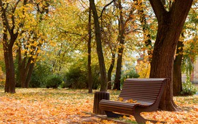 Picture beauty, autumn in the Park, Cherkassy