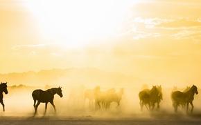 Wallpaper fog, horses, morning