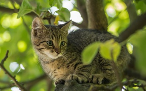 Wallpaper kitty, cat, branches, tree