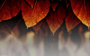 Wallpaper autumn, leaves, macro