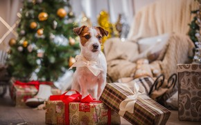 Picture tree, dog, New Year, Christmas, gifts, Christmas, dog, 2018, Merry Christmas, Xmas, funny, cute, decoration, …