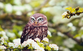 Picture spring, owl, bird, foliage, branch, bokeh, flowers