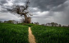 Picture the sky, tree, track