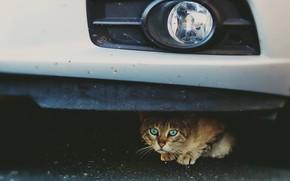 Picture machine, cat, background