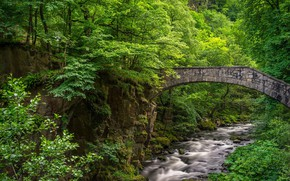 Wallpaper bridge, greens, forest, stream
