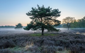 Picture nature, fog, tree, beauty, morning