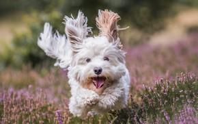 Picture joy, mood, dog, running, walk, doggie, Heather