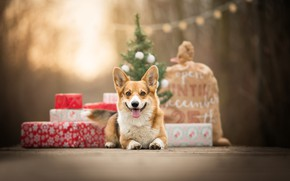Picture gifts, bag, bokeh, doggie, Welsh Corgi