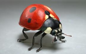 Picture ladybug, art, Jocelyn Strob Simard