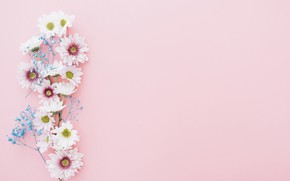 Wallpaper flowers, branch, decor, background, chrysanthemum