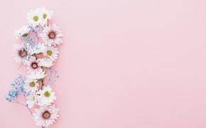 Picture flowers, background, branch, chrysanthemum, decor