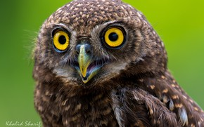 Picture eyes, owl, feathers