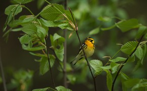 Picture leaves, branches, Bush, bird, baby