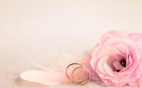 Picture pink, holiday, ring, wedding, eustoma