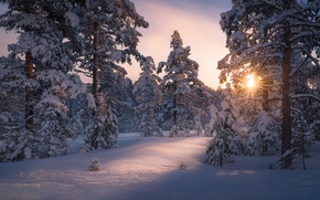 Picture winter, forest, the sun, light, snow, trees, nature