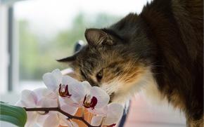 Wallpaper cat, flower, Orchid, cat