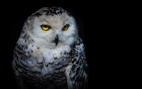 Picture look, night, owl
