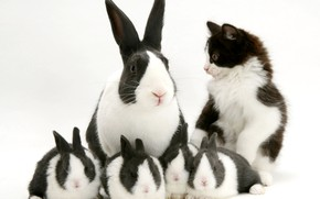 Picture kitty, black and white, rabbits, spotted