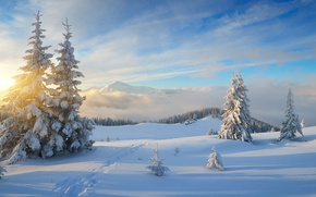 Picture winter, forest, the sky, the sun, clouds, rays, snow, landscape, mountains, hills, trails, beauty, ate, ...