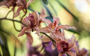 Picture flowers, color, flowering, Orchid
