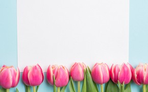 Picture flowers, spring, tulips, pink, fresh, pink, flowers, tulips, spring
