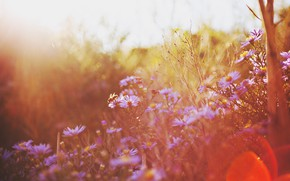 Picture autumn, flowers, nature, bokeh, by gloeckchen