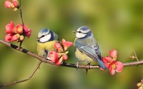 Picture sprig, Birds, flowers spring