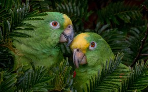 Picture tree, stay, Birds, pair, parrots, ary