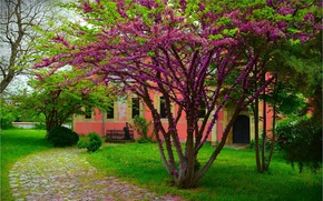 Picture Spring, Trees, Track, Spring, Flowering, Trees, Path, Flowering
