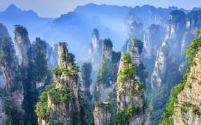 Picture trees, rocks, China, National Park, Hunan province, Zhangjiajie
