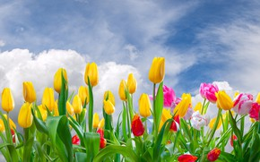 Wallpaper flowers, clouds, buds, tulips, flowering